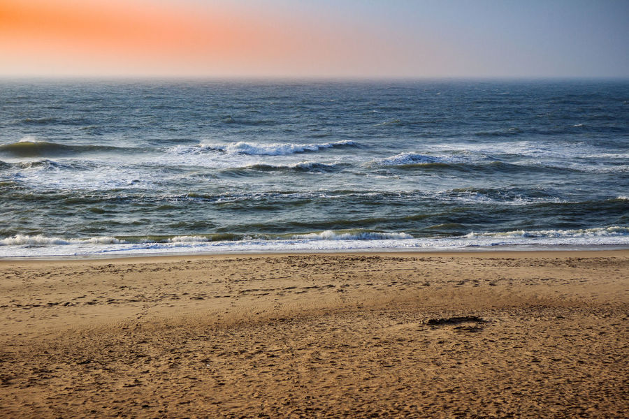 Animal Themes Beach Beauty In Nature Day Horizon Over Water Mammal Nature No People Outdoors Sand Scenics Sea Sky Sunset Water Wave