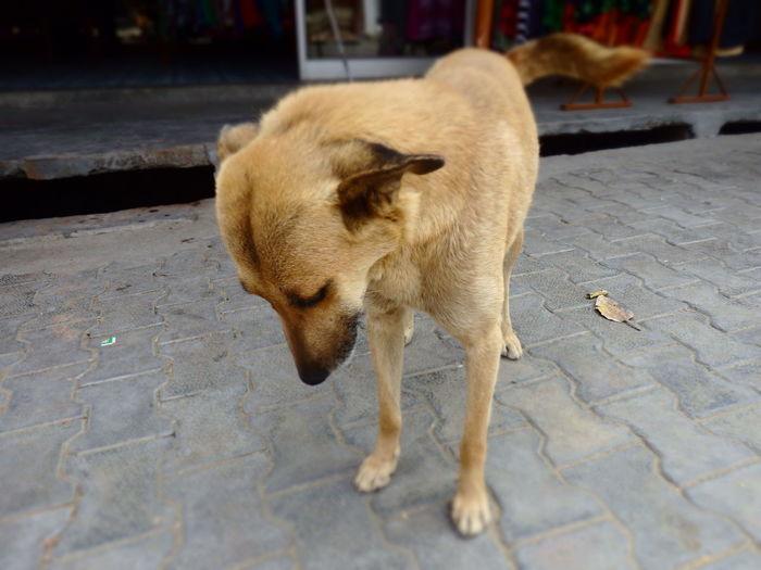 Dog Rishikesh India LaxmanJhula Alone Animal On The Street Stray Dog Water Close-up