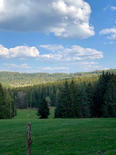 Schwarzwald Plant Cloud - Sky Tree Beauty In Nature Sky Tranquil Scene Growth