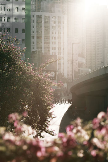 Hong Kong Architecture Beauty In Nature Bridge Building Building Exterior Built Structure City Day Flower Flowering Plant Freshness Growth Nature No People Office Building Exterior Outdoors Pink Color Plant Skyscraper Sunlight Tree The Architect - 2018 EyeEm Awards The Street Photographer - 2018 EyeEm Awards