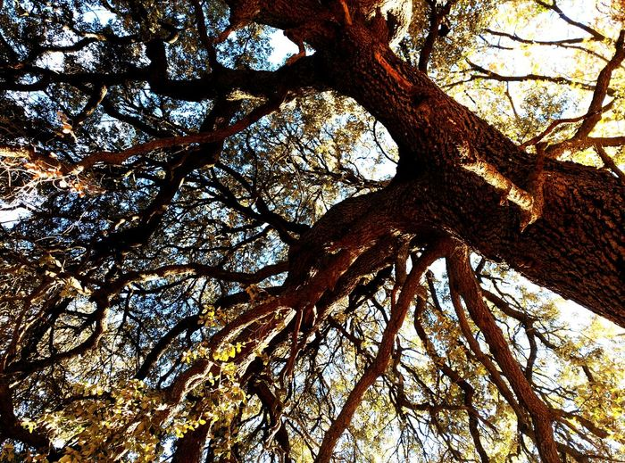 Arrrls pel cap Tree And Sky Arboles , Naturaleza Arbres Tree_collection  Lifenature Nature_perfection AWalkInTheWoods Treescollection