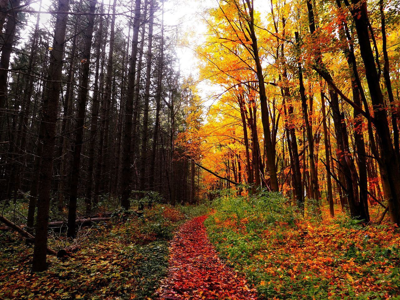 TREES BY PLANTS IN FOREST DURING AUTUMN