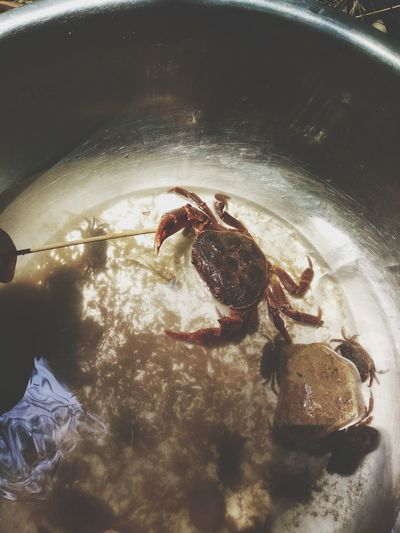 Crab Water One