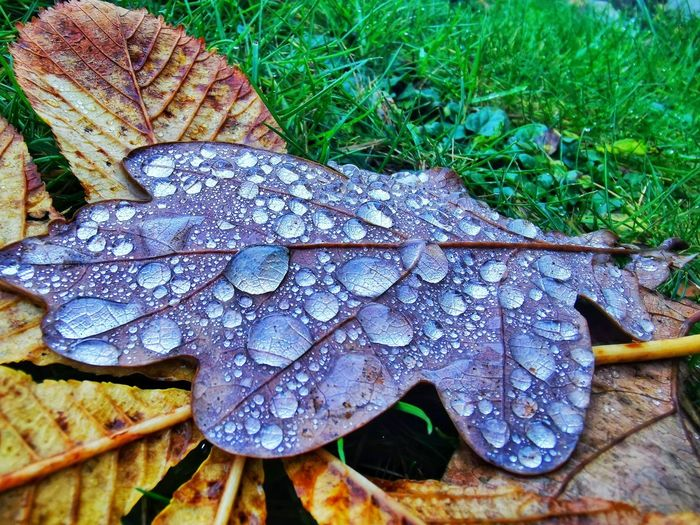Close-up of raindrops on dry leaves on field