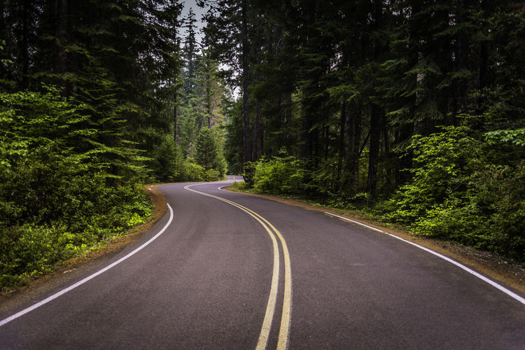 Surface level of curved road along trees