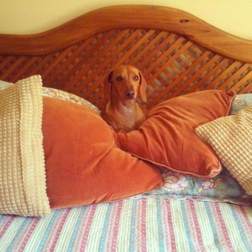 Alguien se cree dueña de la cama creo....