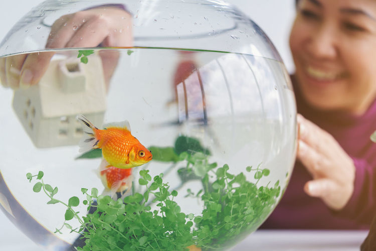 A woman's hand is decorating the aquarium in a fishbowl as a hobby. Animal Animal Themes Animals In Captivity Close-up Domestic Domestic Animals Fish Fishbowl Glass - Material Goldfish Indoors  One Animal One Person Pet Owner Pets Real People Swimming Transparent Vertebrate Water