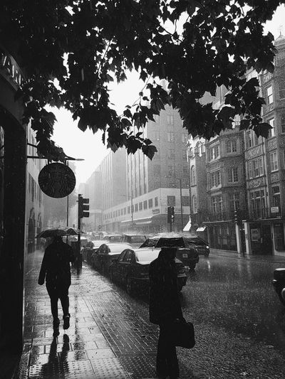 Lovely London weather Street Tree Road Day Wet People Rainy Day Londonlife