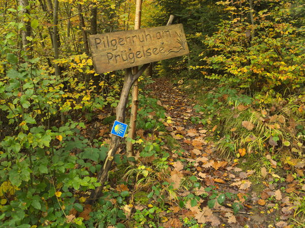 st. james path germany Baden-Württemberg  CaminodeSantiago Christianity Jakob Nature Path Saint James Scallop Sign St. James Way Of St. James Camino De Santiago Forest Germany Jakobsweg Pilgrim Pilgrim Mussel Pilgrim Route Scallop Seashell Shell Shield South Germany Way Wooden Yellow Color