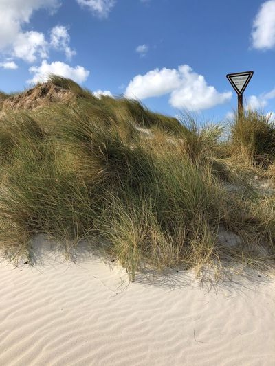 • Dünenschutzgebiet • Helgoland_collection Helgoland Environmental Conservation Dune Sky Nature Day Cloud - Sky Land No People Sunlight Outdoors Beauty In Nature Beach Sign Scenics - Nature Low Angle View Sand Tranquil Scene Plant Sand Dune Landscape Grass Environment Beauty In Nature
