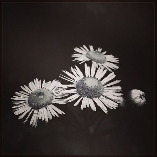 Black -and-white photograph 今天拍的最喜欢这一张:)