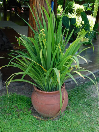 Potted Plant,