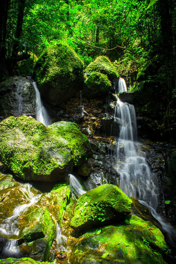 Rain water flowing through the rocks in a forest area of Goa. Waterfall Waterfalls In Forest Smooth Waterfall Longexposure Longexposurephotography Flowing Water Forest Greenery Goa India Eyembestshots Eyembestseller Sales
