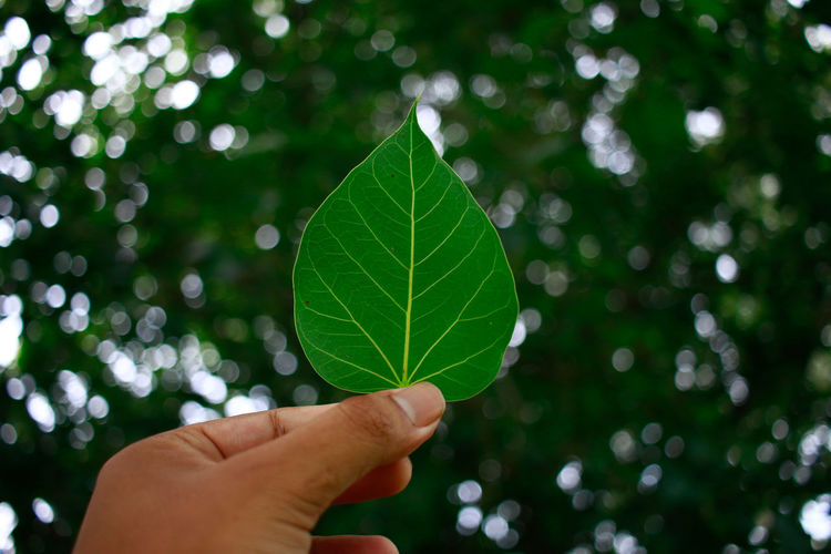 Body Part Close-up Clover Finger Focus On Foreground Green Color Hand Holding Human Body Part Human Hand Human Limb Leaf Leaf Vein Leaves Nature One Person Outdoors Personal Perspective Plant Plant Part Real People Tree Unrecognizable Person