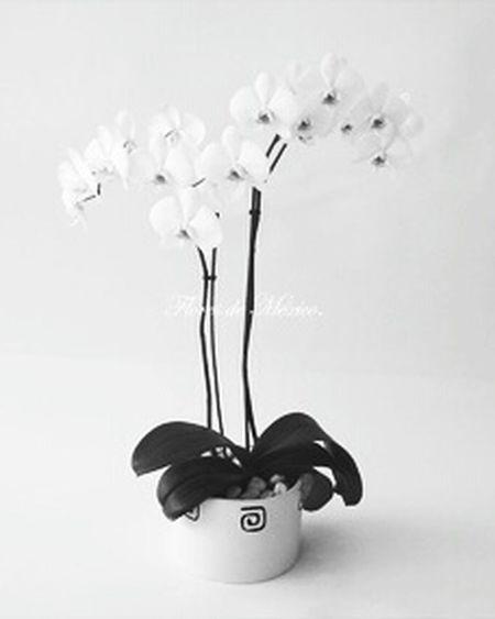 Flowers Orquids Orquideas Orquideas❤ Mis Favoritas❤ Favorites