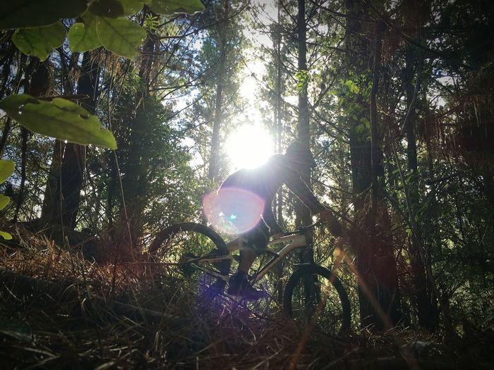 Rotorua mtb