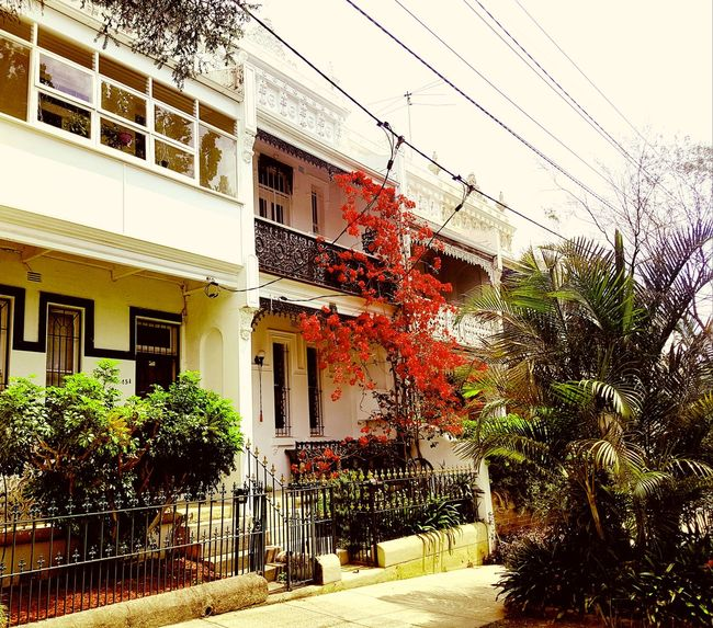 Terraced Houses in Paddington, Sydney Architecture Built Structure Window Day Outdoors No People Growth Nature Tree Sky Building Exterior Sydney, Australia Houses Terraced Housing Flowers
