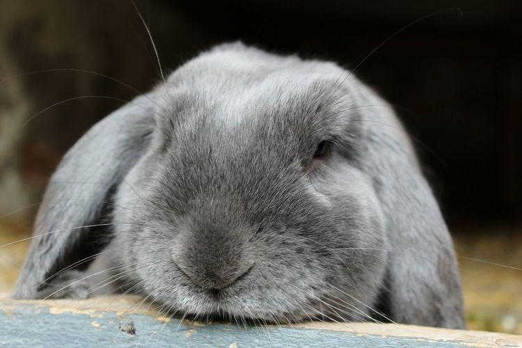 One Animal Pets Animal Themes Mammal No People Animal Close-up Domestic Animals Nature Outdoors Day Rabbit 🐇 Rabbit Rabbits Animals Pet Portraits