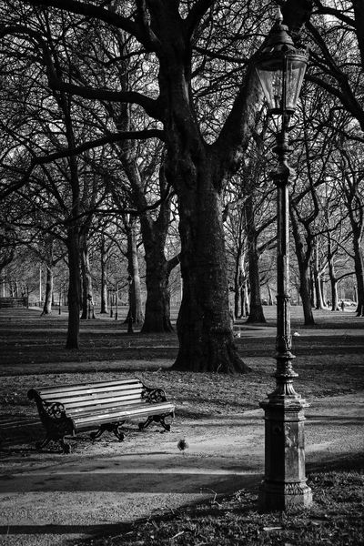 St. James's Park Bench Branch City Day Empty Growth Land Nature No People Outdoors Park Park - Man Made Space Park Bench Plant Seat Street Tranquility Tree Tree Trunk Trunk