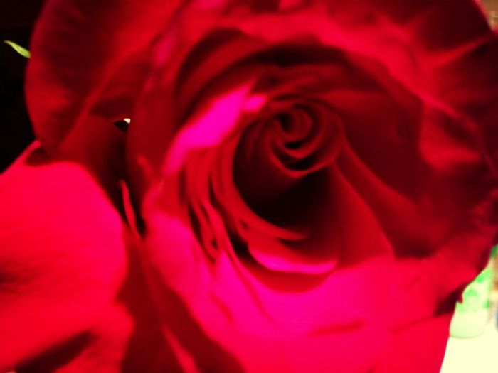 Rose From My Brother