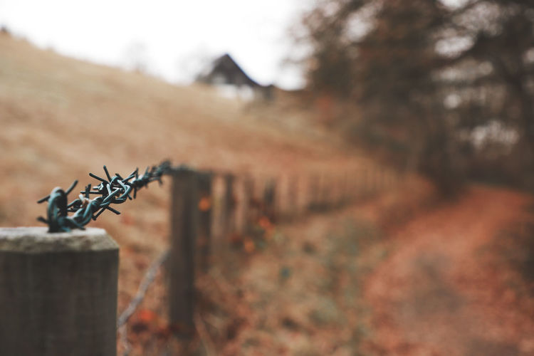 Nature Way Autumn Autumn colors No People Protection Safety Architecture Focus On Foreground Day Security Built Structure Selective Focus Fence Outdoors Building Exterior Boundary Barrier Landscape Land Metal Field