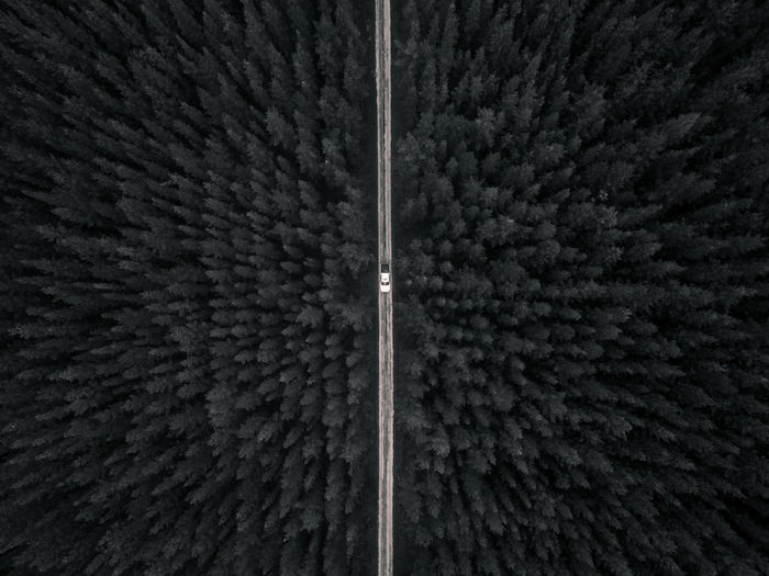 Above the dark forest Full Frame Backgrounds No People High Angle View Directly Above Road Forest Drone Photography Drone  Aerial Shot Pine Forest WoodLand Dark Car Outdoors EyeEm Best Shots EyeEmNewHere EyeEm Nature Lover