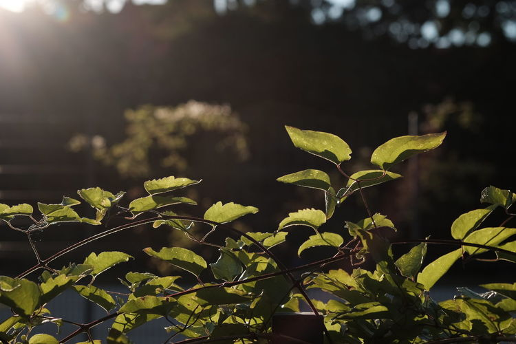 Growth Plant Leaf Plant Part Nature Beauty In Nature No People Sunlight Green Color Focus On Foreground Close-up Day Outdoors Freshness Fragility Vulnerability  Beginnings Tranquility Field Plant Stem Leaves