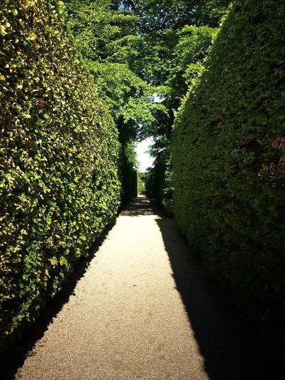 Labyrinth at
