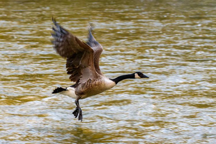 Bird Flying Over Water