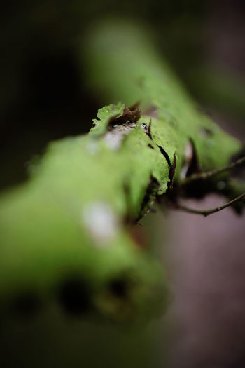 Bark Beautiful Mossy TreePorn Twigs Wood Beauty In Nature Branch Broken Close-up Day Forest Green Color Growth Mossy Tree Nature No People Outdoors Plant Selective Focus Slivered Twig Twigs And Branches