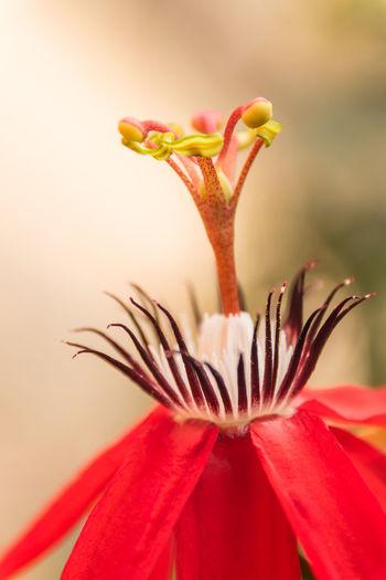 Close up pollen