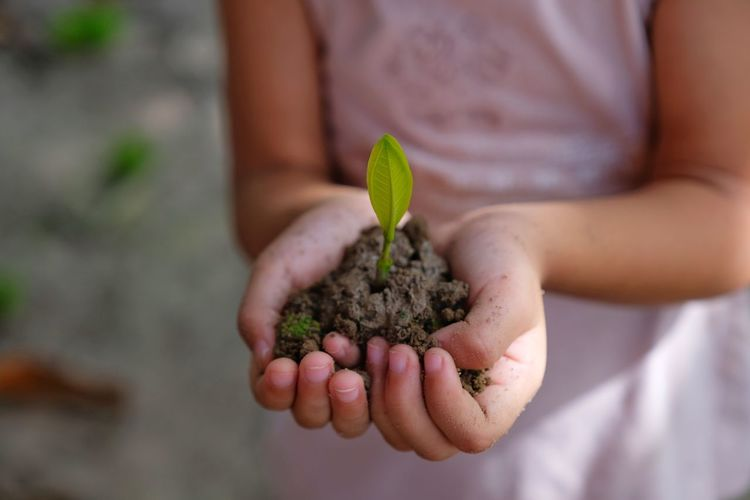 YOUNG TREE GROWING IN THE PEOPLE HAND Beginnings Care Close-up Dirt Focus On Foreground Gardening Growth Hand Hands Cupped Holding Human Body Part Human Hand Leaf Midsection Nature New Life One Person Outdoors Plant Plant Part Planting Real People Seedling Vulnerability