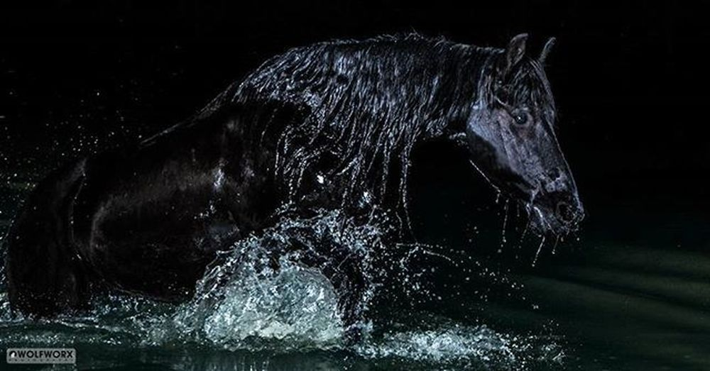 The big exit Friesan Horse Water Splash Dam River Night Photography Equine Horsesofinstagram Horses_of_instagram Horsestagram Instahorses Wild Mane Instagood Ilovemyhorse Powerful Beautiful Pretty Photooftheday Pentax Wolfworx