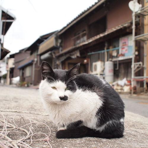 Beautiful Town Japan Tomonoura Travel First Eyeem Photo Cats 鞆の浦