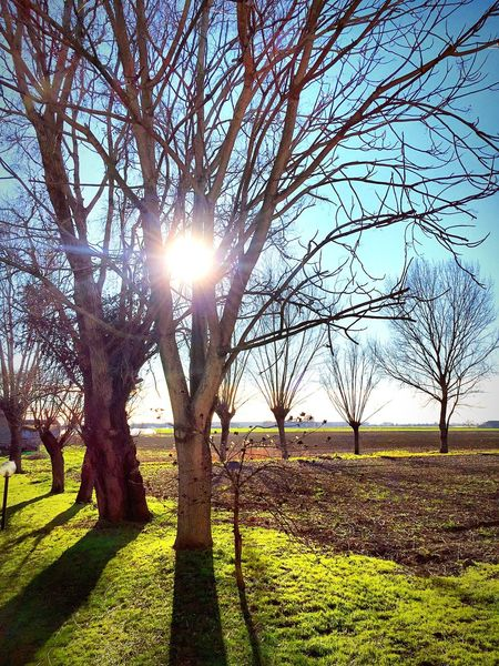 Nature 😍 Nature Nature Photography Nature_collection Sun Sole Cielo Campagna EyeEm Best Shots EyeEm Nature Lover Hello World Relaxing Photooftheday First Eyeem Photo Mantova Italy Lombardia Italia Loveitaly Campaign Winter Wintersun
