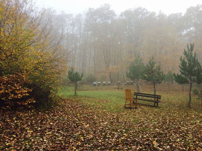 Autumn Senescence