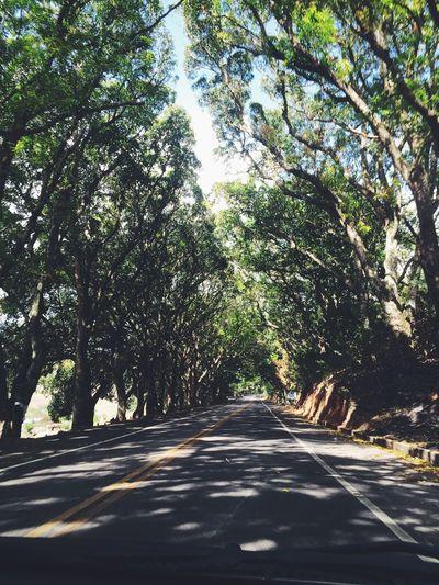 Trees Street Nature Ecologic No Traffic