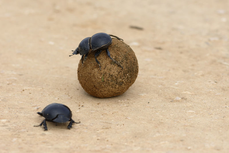 Close-up of beetles