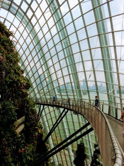 Cloud Forest Dome Travel Photography Singapore Modern City Tree Bridge - Man Made Structure Sky Architecture Built Structure Architectural Feature Skylight Tall - High Skyscraper Architectural Detail Architectural Design Ceiling
