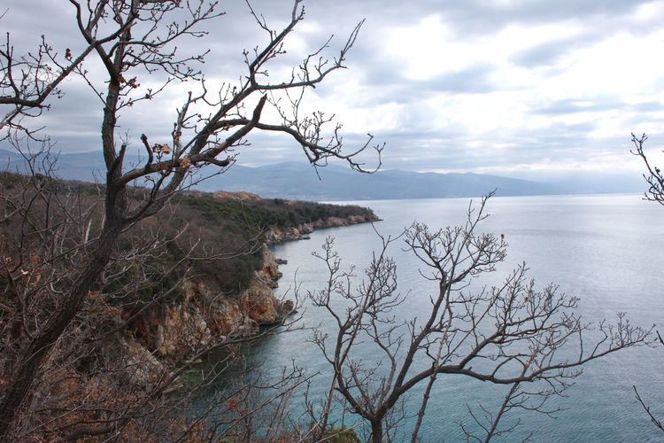 Water Sky Tranquility Tranquil Scene Scenics - Nature Cloud - Sky Beauty In Nature Tree Sea Nature Plant No People Non-urban Scene Branch Bare Tree Day Land Idyllic Horizon Over Water Outdoors Tree Clouds Coast Coastline Shore Rocks Cliff Scenics