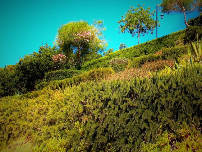 who knows the countryside will love it Agriculture Beauty In Nature Blue Clear Sky Day Field Freshness Green Green Color Growing Growth Low Angle View Lush Foliage Nature No People Non-urban Scene Outdoors Plant Plantation Scenics Sky Tranquil Scene Tranquility Tree Vacations