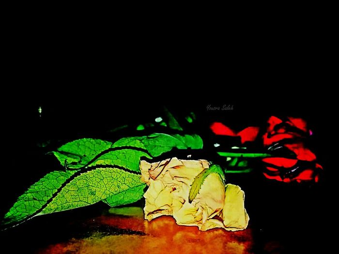 EyeEm Flower Flowers Flower Flowerlovers Flowers_collection Roses Photography Yellow Flower Red Flower Yellow Rose🌹 Red Rose Roses Flowers  Flowers Photography Roses_collection Flowers 🌸🌸🌸 Flower Collection Rose🌹 Rose♥ Roses Simplicity Closeup Close-up Black Background Mobile Photography Smartphone Photography Darkness And Light 🌻🌹💐🍁🌼