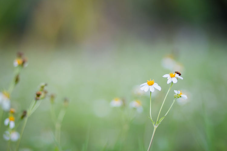 Close-up of small flowering plant on field