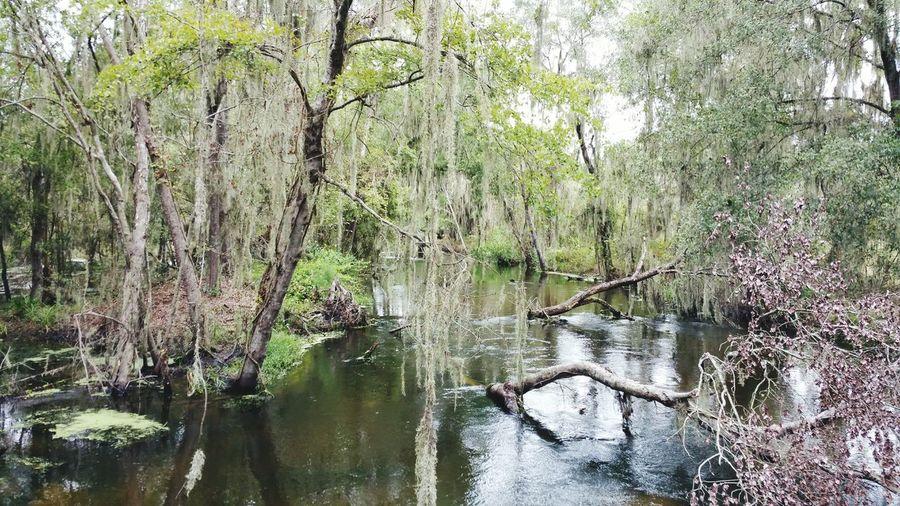 Florida Swamp Creek