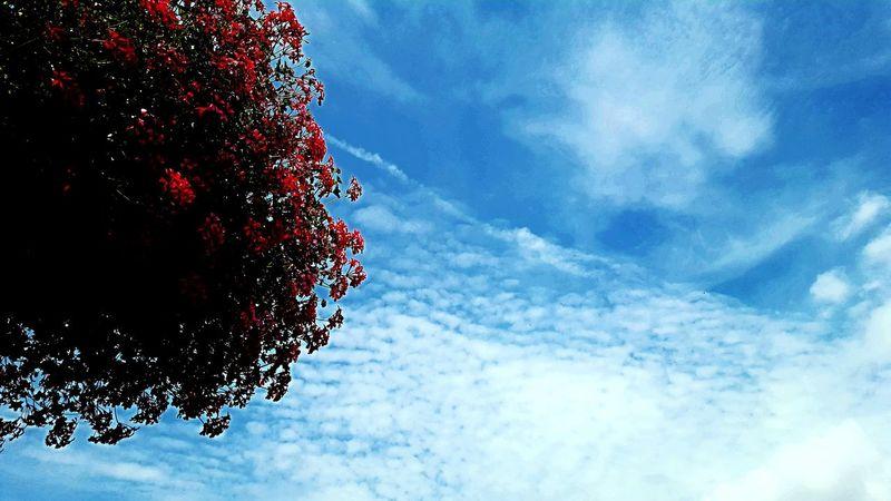 Blue Sky Nature Sky Beauty In Nature Day Blooming Growth Freshness Clear Sky Cloud - Sky