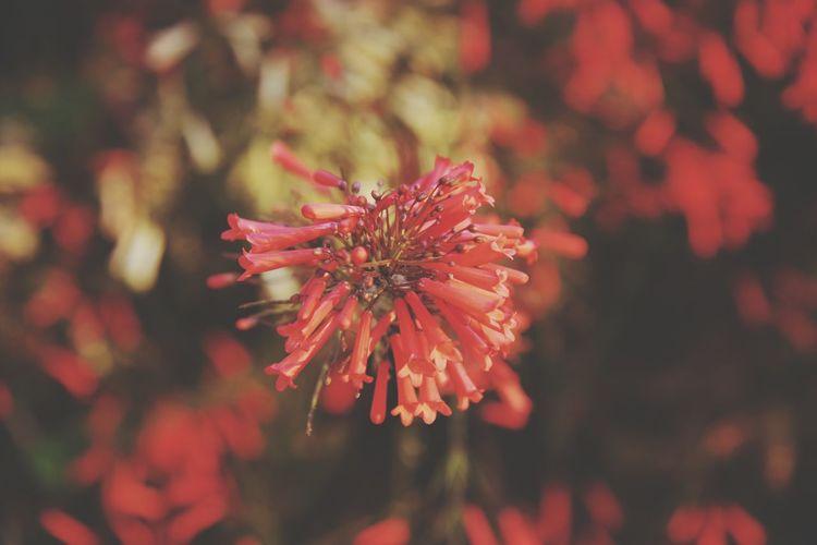 flower of