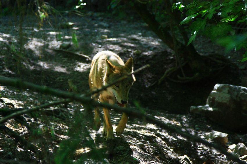 Zoo Wilde Life Animals