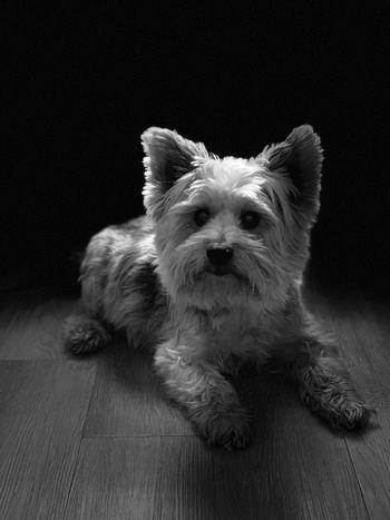 Mammal One Animal Dog Pets Canine Domestic Domestic Animals