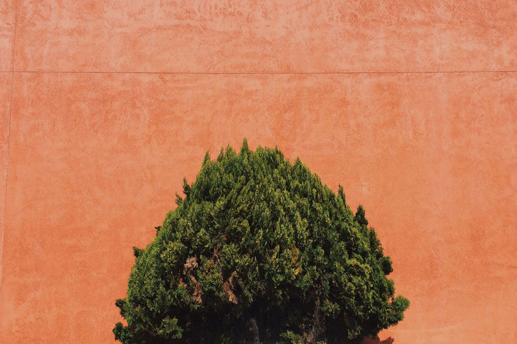 Close-up Day Extreme Close Up Green Green Color Growth Lush Foliage Multi Colored Nature No People Orange Red Single Tree Tree Vibrant Color Wall - Building Feature