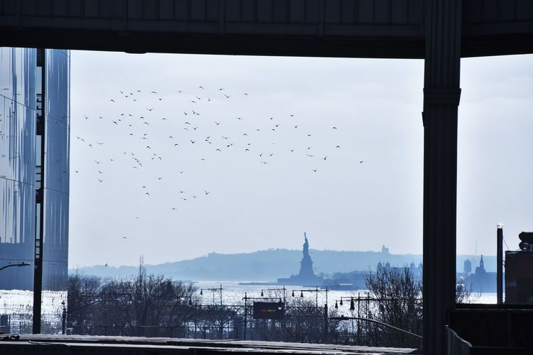 Birds flying in sky seen through glass
